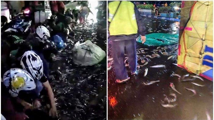 VIRAL Video Warga Panen Ikan Lele di Jalan Usai Truk Kecelakaan hingga Terguling, Dikritik Netizen