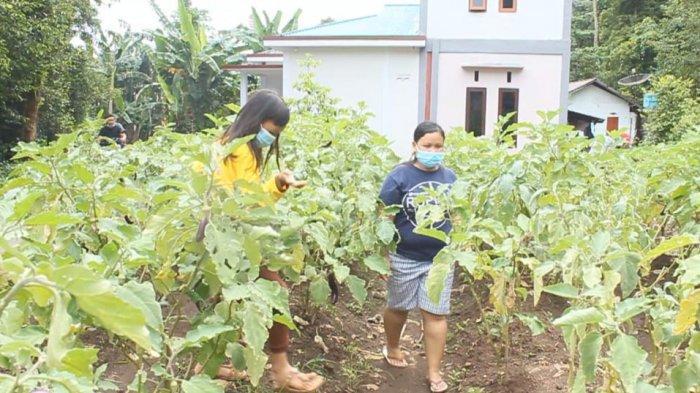 Warga Kepulauan Sitaro Tanami Lahan Kosong Selama PPKM