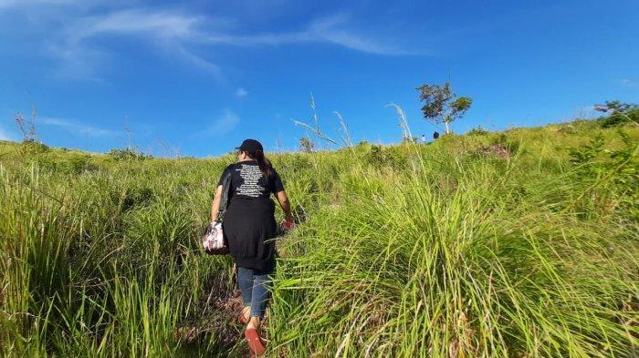 Menyusuri padang savana di Pulau Bangka.