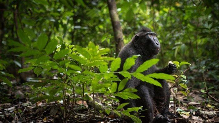 Mengenal Cagar Alam Gunung Tangkoko, Melihat Surga Aneka Satwa Endemik Sulawesi Utara
