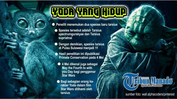 'Yoda' Baru Ditemukan di Sulawesi, Ilmuwan Umumkan Saat Hari Star Wars
