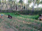 aktivitas-bercocok-tanam-yang-dilakukan-para-petani-perempuan-di-desa-tolondadu-bolselgdfgdfgdfgdf.jpg