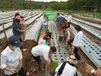 balitbangtan-agar-petani-lokal-mengembangkan-komoditas-bawang-merah.jpg