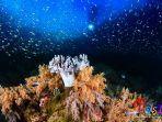 berbagai-biota-laut-8787.jpg