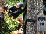 bksda-agam-sumatera-barat-pasang-kamera-pengintai-makhluk-aneh-di-pohon.jpg