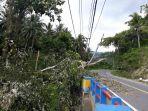 bpbd-bolsel-minta-warga-yang-tinggal-dekat-pohon-jangan-berdiam-diri-ketika-ada-badai.jpg