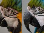 burung-makaw-biru_20180830_131240.jpg