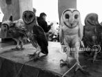 cantik-dan-bunga-burung-hantu-jenis-sulawesi-masked-owl-atau-nama-latinnya-tyto-rosenbergii_20180527_104910.jpg