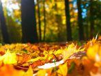 daun-berubah-warna-menjadi-kuning_20181108_155257.jpg
