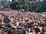 disperindagkop-dan-ukm-bekerja-sama-dinas-pertanian-kembangkan-minyak-kelapa-kampung.jpg
