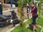 dua-anjing-jenis-pitbull-hitam-dan-beagel-coklat-membuat-kepolisian-kesulitan.jpg