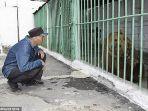 ekaterina-atau-katya-seekor-beruang-coklat-betina-37434.jpg
