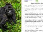 empat-pria-di-uganda-ditangkap-karena-bunuh-gorilla-324.jpg