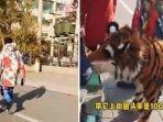 foto-kolase-yang-memperlihatkan-anjing-dicat-loreng-agar-menyerupai-harimau-di-china.jpg