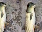 geger-nelayan-tangkap-ikan-berkepala-seperti-burung_20180619_160023.jpg