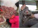 hewan-liar-yang-dijual-belikan-di-pasar-hewan-wuhan-china-324.jpg