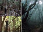 hutan-aokigahara-1.jpg