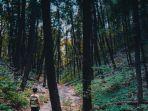 hutan_20181027_235227.jpg