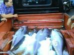 ikan-tuna-di-bitung_20151229_175817.jpg