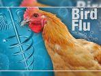 ilustrasi-flu-burung-kenali-apa-itu-virus-h10n3.jpg