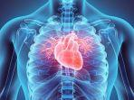 ilustrasi-jantung-yodiyim.jpg