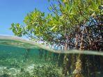 ilustrasi-mangrove-ttyy.jpg