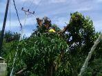 kabel-listrik-menyentuh-pohon_20180129_195445.jpg