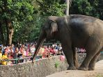 kebun-binatang-ragunan_20180619_174119.jpg