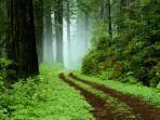 keindahan-hutan222_20150725_101541.jpg