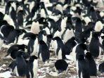 koloni-penguin-super_20180306_112552.jpg