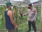 lahan-pertanian-warga-di-desa-touliang-kecamatan-kakas.jpg