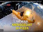 lalat-pizza_20171218_205402.jpg