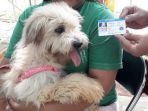 microchip-pada-anjing_20181009_205007.jpg