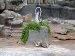 penguin-grape_20180111_175409.jpg