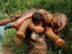 penjaga-hutan-india-selamatkan-anak-gajah_20171231_120841.jpg