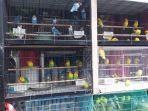 penjual-burung-di-jalan-b-w-lapian-tikala-manado-sulawesi-utara-rabu-3062021.jpg