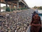 petani-ikan-tengah-menyaksikan-ribuan-ikan-yang-mati-mendadak_20181105_234644.jpg