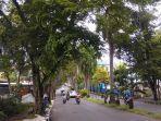 pohon-rindang-di-kota-manado.jpg