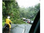 pohon-tumbang-di-ruas-jalan-manado-tomohon_20170108_153851.jpg