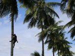 produk-air-kelapa-dari-sulawesi-utara-semakin-diminati-di-asia-tenggara.jpg