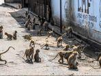 ribuan-monyet-menguasai-kota-lopburi-thailand-warga-ketakutan-ke-luar-rumah-55.jpg