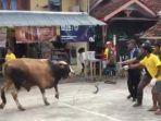 sapi-kurban-cukup-besar-mengamuk-di-bale-rw-01-kelurahan-kahuripan-23467427.jpg