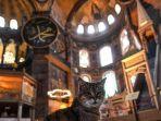 seekor-kucing-tetap-tenang-duduk-di-dalam-museum-hagia-sophia-di-istanbul.jpg