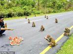 sekumpulan-monyet-yang-menerapkan-physical-distancing-dfgdfgdf.jpg