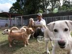 seorang-keeper-bersama-anjing-anjing-di-shelter-afmi-di-tomohon-sulawesi-utara_20180417_102710.jpg