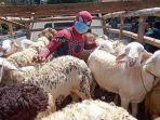 seorang-relawan-badan-narkotika-kabupaten-sukoharjo-bersama-puluhan-kambing-235.jpg