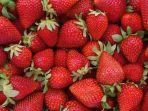 strawberry_20180316_204148.jpg