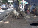 suasana-di-tempat-penjualan-hewan-kurban_20180821_102822.jpg