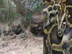 ular-sanca_20180716_204408.jpg