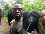 viral-gorila-foto-selfie-layaknya-artis-instagram.jpg